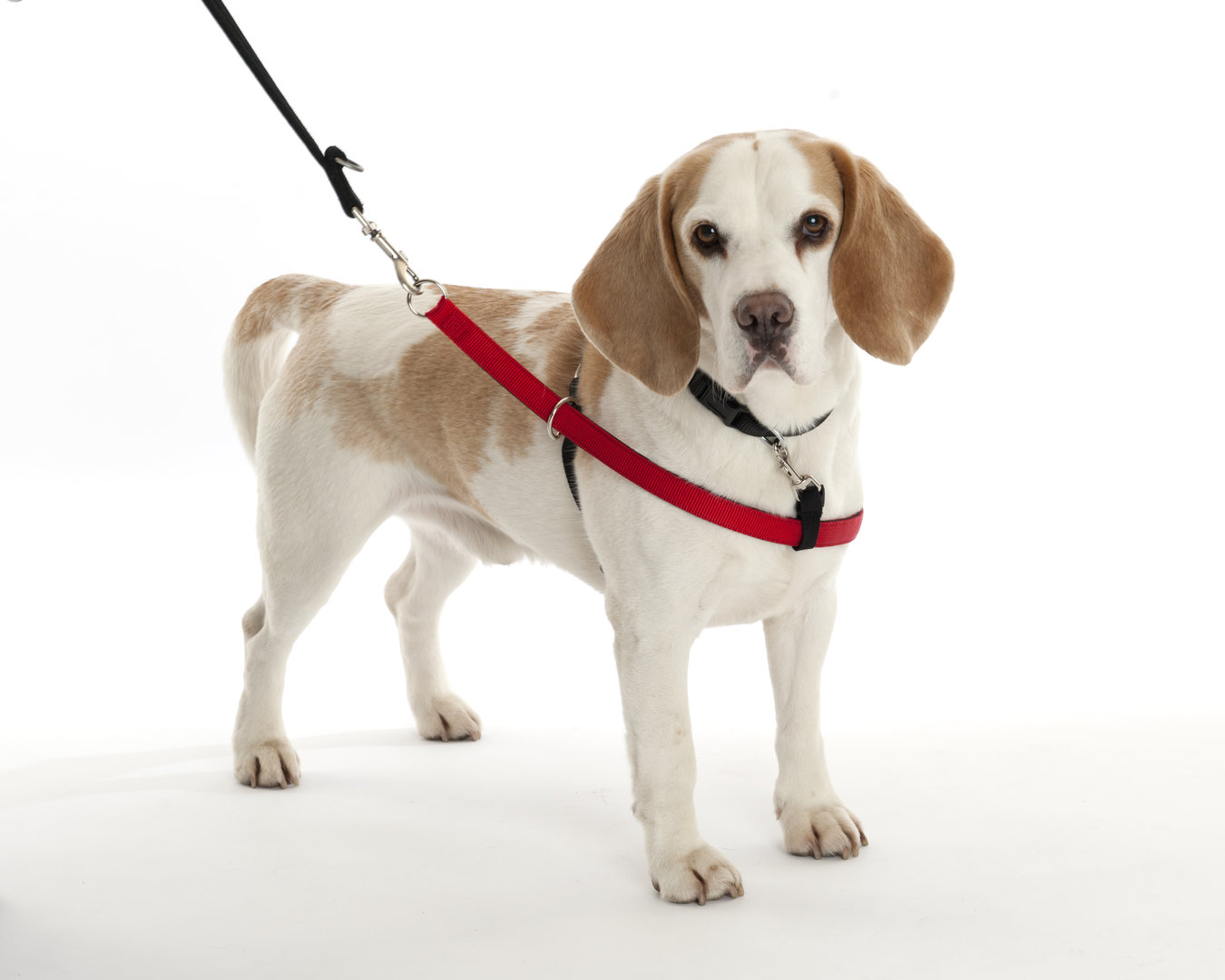WALKEZEE HARNESS, XL, 80 cm +