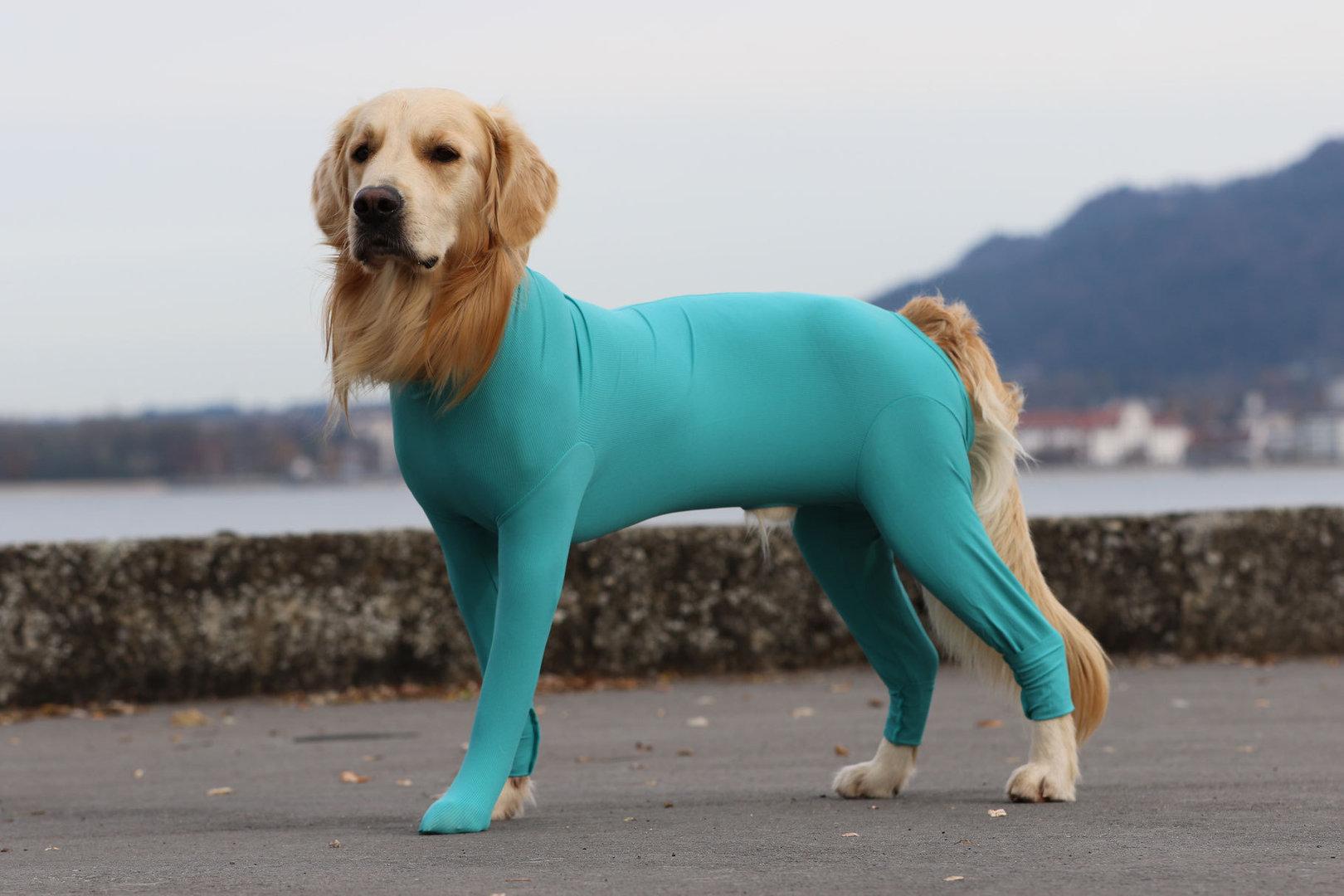 DOG BODY mit 4 Beinen, gün, 3XS - XXL für Hündinnen und Rüden